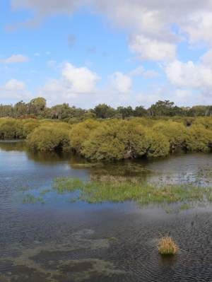 Whiteman Park wetlands Horse Swamp from the lookout