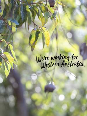 Were working for WA gum leaves